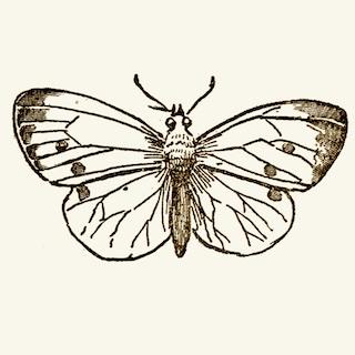 Schmetterling - ewigeweisheit.de